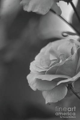 Photograph - Pink Rose - Bw by Tannis Baldwin