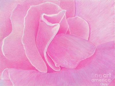 Painting - Pink Rose by Carol Bond