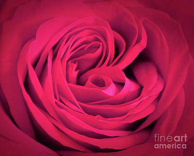 Pink Rose Close-up Background. Romantic Love Greeting Card Print by Michal Bednarek