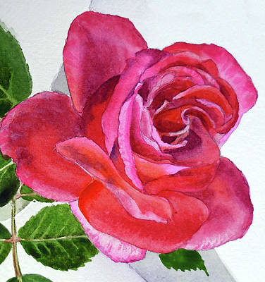 Roses Royalty-Free and Rights-Managed Images - Pink Rose Close Up Watercolor by Irina Sztukowski