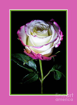 Photograph - Pink Rose by Deborah Klubertanz