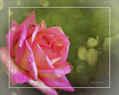Photograph - Pink Rose Dream Digital Art 3 by Walter Herrit