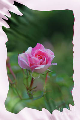 Photograph - Pink Rose by Elaine Hunter