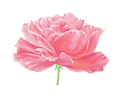Painting - Pink Rose by Elizabeth Lock