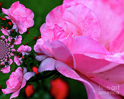 Photograph - Pink Rose Flower Abstract by Smilin Eyes  Treasures