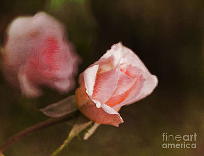 Digital Art - Pink Rose In The Evening by Mary Machare