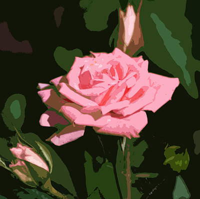 Photograph - Pink Rose  by Kathleen Stephens