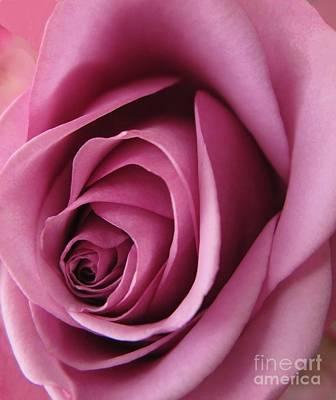 Photograph - Pink Rose Macro 2 by Tara Shalton