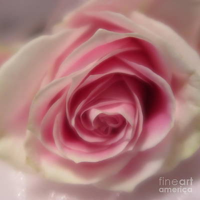 Photograph - Pink Rose Macro Abstract by Tara Shalton