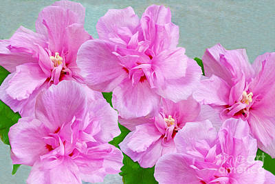 Rose Of Sharon Photograph - Pink Rose Of Sharon by Laura D Young