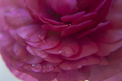 Pink Rose Petals Art Print