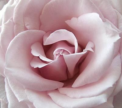 Pink Rose Art Print by Robert Meanor