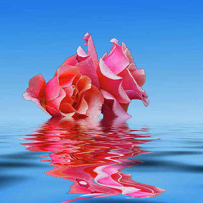 Photograph - Pink Rose Sea Plale Blue by David French