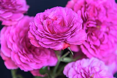 Pop Art - Pink rose by Sergei Dolgov