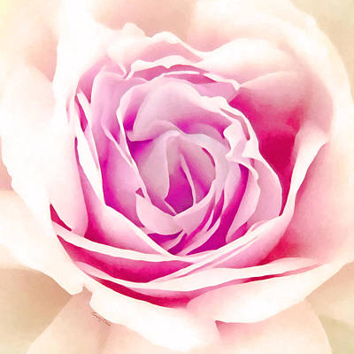 Pink Rose Art Print by Stacey Chiew