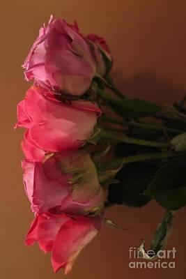 Photograph - Pink Roses 2 by Tara  Shalton