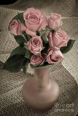 Photograph - Pink  Roses by Alana Ranney