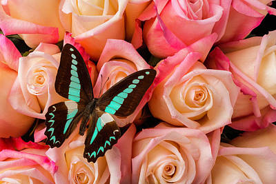 Dusky Photograph - Pink Roses Blue Black Butterfly by Garry Gay