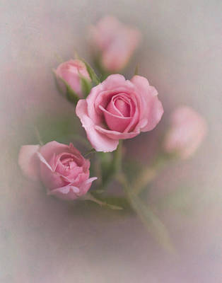 Photograph - Pink Roses by David and Carol Kelly