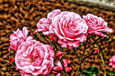 Photograph - Pink Roses by Dennis Baswell