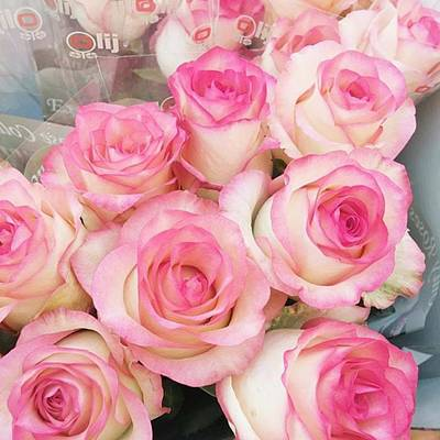 Roses Photograph - Pink Roses! #fpoefebruary #fpoe #pink by Ivy Ho