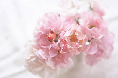 Pink Flower Photograph - Pink Roses by Jill Ferry