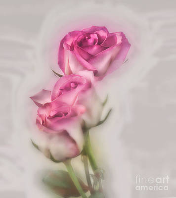 Photograph - Pink Roses by Shirley Mangini