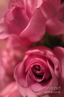 Photograph - Pink Roses  by Tara  Shalton