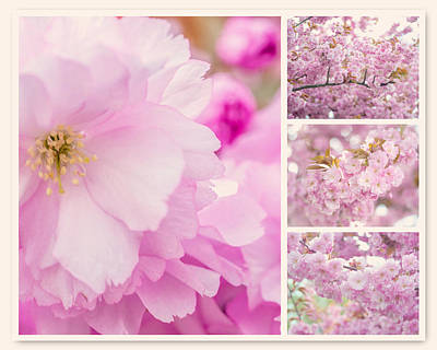 Photograph - Pink Sakura Bloom Collage by Jenny Rainbow