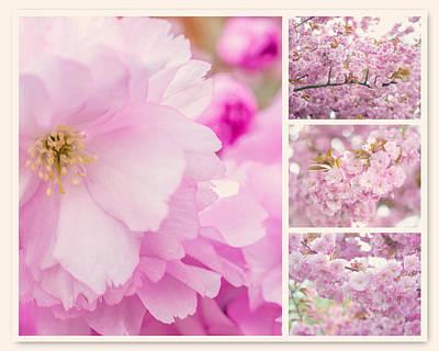 Photograph - Pink Sakura Bloom Collage by Jenny Rainbow