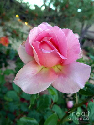 Photograph - Pink Sedona Rose by Marlene Rose Besso
