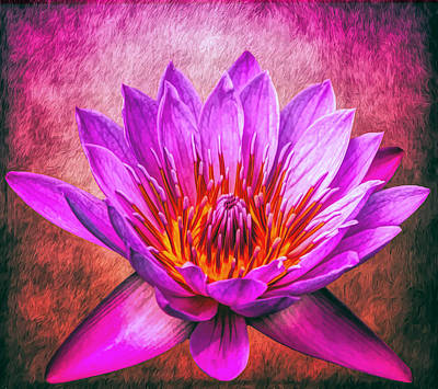 Photograph - Pink Sensation by Judy Vincent