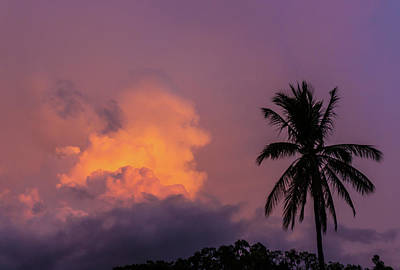 Photograph - Pink Skies And Palm Tree by John Pierpont