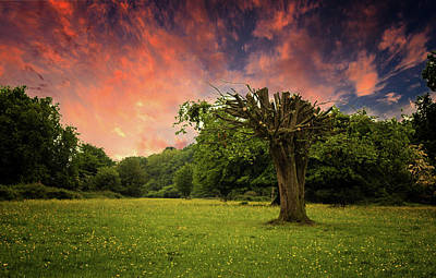 Spring Scenery Photograph - Pink Sky At Night by Martin Newman