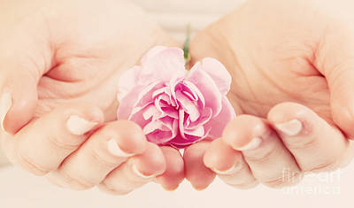 Protection Photograph - Pink Soft Flower In Woman Hands by Michal Bednarek