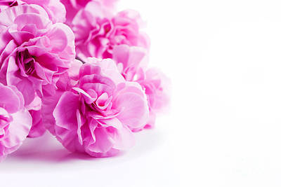Pink Soft Spring Flowers Bouquet On White Background Art Print