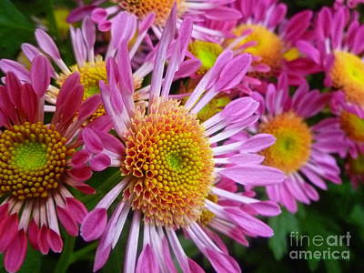 Photograph - Pink Spoon Mums Fantasy by Lingfai Leung