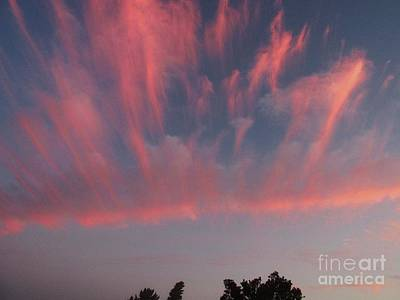 Photograph - Pink Spray by Dianne  Connolly