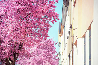 Photograph - Pink Spring Bloom On Street by Jenny Rainbow