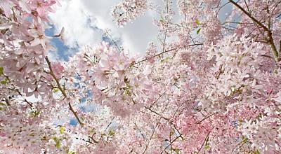 Pink Spring Art Print by Daniel Furon
