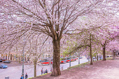 Photograph - Pink Spring In Prague by Jenny Rainbow