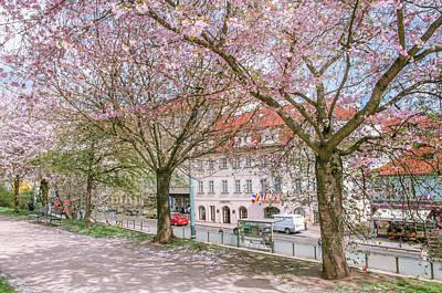 Photograph - Pink Spring In Prague. Sakura Alley by Jenny Rainbow