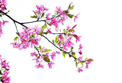 Pink Spring Art Print by Marilyn Hunt
