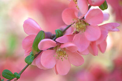Photograph - Pink Spring Marvels by Jenny Rainbow
