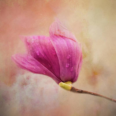 Photograph - Pink Spring Treasure by Jai Johnson