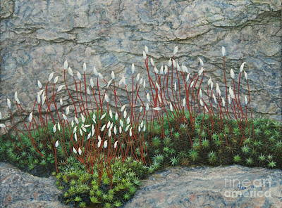 Painting - Pink Stony Creek Granite Still Life Study by Cindy Lee Longhini