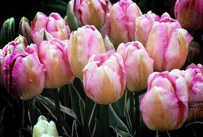 Animal Watercolors Juan Bosco - Pink Striped Tulips by Rebecca Renfro
