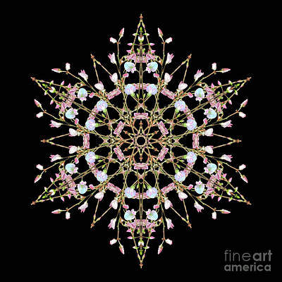 Wall Art - Photograph - Pink Summer Star by Karen Jordan Allen