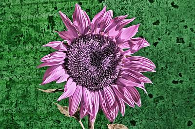 Photograph - Pink Sunflower by Alison Frank