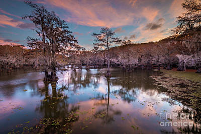 Photograph - Pink Sunrise At Caddo Lake by Inge Johnsson